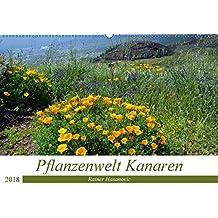 Pflanzenwelt Kanaren (Wandkalender 2018 DIN A2 quer): Traumhafte Bilder von einzigartigen Pflanzen der Kanaren. (Monatskalender, 14 Seiten ) (CALVENDO ... www.teneriffaurlaub.es by Rainer Hasanovic, ©