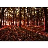 murando - Fototapete selbstklebend 490x280 cm decor Tapeten Wandtapete klebend Klebefolie Dekofolie Tapetenfolie - Wald Natur Landschaft Bäume c-B-0127-x-d