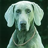 Original Kupfer Therapie Hund Halsband