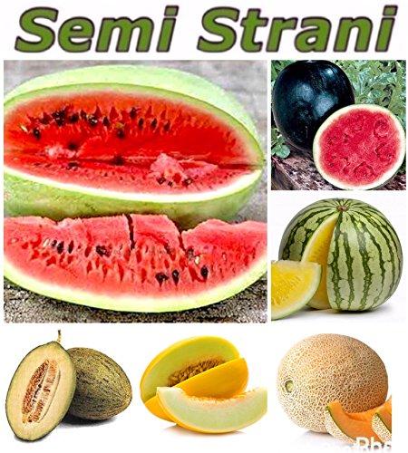 60 Graines Pasteque et Melon: Geant, SugarBaby, Jaune, Canari, Vert Piel De Sapo, Cantaloupe