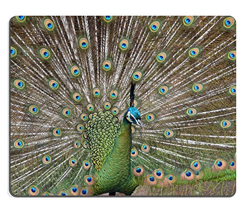 MSD Natural Rubber Gaming Mousepad IMAGE ID: 10764023 peacock displaying his feathers (Peacock Displaying Feathers)
