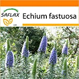 SAFLAX - Garden in the Bag - Blauer - Natternkopf - 100 Samen - Echium fastuosa
