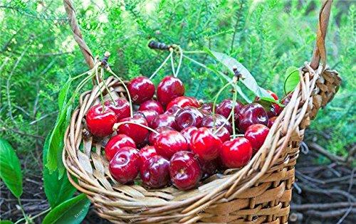 Coloré cerise semences Bonsai extérieur des plantes rares sucré non-OGM Big Fruit Cerise Haute Germination meilleur cadeau pour les enfants de 30 Pcs