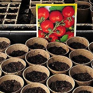 Pot de germination