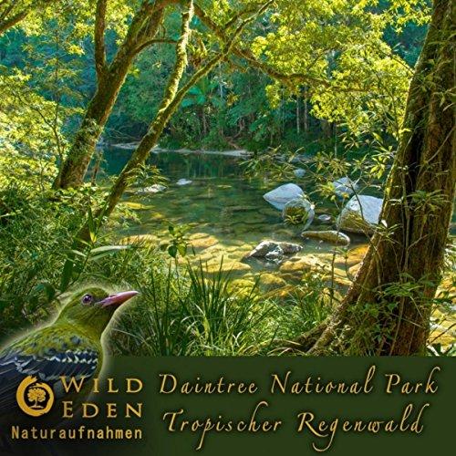 Regenwald (Gesang Der Nacht Ähnliche Wirkung Wie Weisses Rauschen) [Natürliches Einschlafmittel Ohne Nebenwirkung Gema Frei] ()