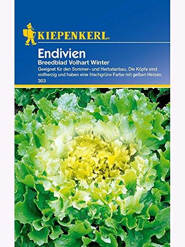 Endivien Breedblad Vollhart Winter Escorial grüner