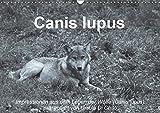 Canis lupus (Wandkalender 2019 DIN A3 quer): Impressionen in schwarz-weiss aus dem Leben der Wölfe (Monatskalender, 14 Seiten ) (CALVENDO Tiere)