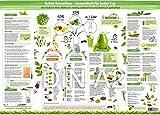 Grüne Smoothies Essenzposter für die Wand (DIN A2) - Gesundheit für jeden Tag -Viele Anregungen und Ideen, wie Sie die gesunde Mini-Mahlzeit richtig zubereiten und bewusst genießen (2018)