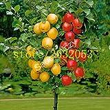 100 graines de pommier pommier nain bonsaïs graines de fruits MINI pour la plantation de jardin à la maison envoyer de grandes graines de fraises comme cadeau