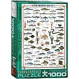 Eurographics Puzzle Fisch, Muscheln und Mollusken, 1000 Teile