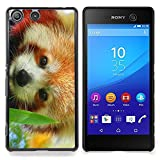 [ For SONY XPERIA M5 ][ Xtreme-Cover ] [ Hart Rückseite Schutzhülle Case ] - Funny Hypno Toad Big Frog