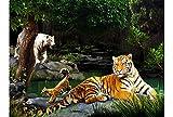 Lenticular Poster - 3D Poster - Tigers - 16135 - Wild Republic