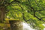 Artland Qualitätsbilder I Alu Dibond Bilder Alu Art 60 x 40 cm Botanik Bäume Laubbaum Foto Grün C7ZM Lindenhofpark am Bodensee