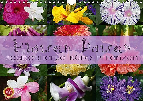 flower-power-zauberhafte-kubelpflanzen-wandkalender-2017-din-a4-quer-erleben-sie-12-zauberhafte-kube