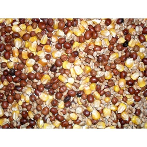 MALTBY'S STORES 5KG PIGEON CORN