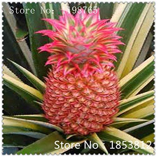 Ananas graines de fruits Graines 1bag = Graines vertes Rare Exotic Bonsai Plante en pot Cadeau Décoration Maison & Jardin