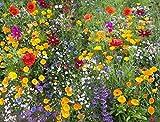 Cioler Wildblumensamen Wildblumen Samen Blumensamen mix mehrjährige für Ihr Garten,Pflegeaufwand gering