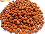 Discount4product lose 5Gesicht oder 5Mukhi Rudraksha-Perlen, holz, braun, 8MM-200pcs