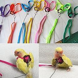 Girasool - Arnés y Correa para pájaros para Loro, cacatúas africanas, Cuello Redondo, paracaídas, Ajustables y con diseño de Banda voladora antiácaros