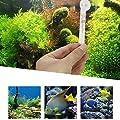 Mini Aquarium Glas Thermometer Saugnapf für Aquarien, Präzise, Kriechtier, Tauchpumpe Marine oder Tropical Tank Thermometer