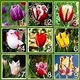 9 colores de semilla de 450 perfumes tulipán (50 semillas cada color) de la flor de alto grado de semillas de bonsái, más bel