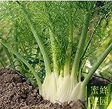 Portal Cool 100Pcs Schwangere Fragrant Cut Fenchel Bonsai Samen Pflanze Garten Inneneinrichtungen Rare