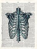 Fertig-Bild - Christopher James: Vintage Anatomy Study 24 x 30 cm Skelett Anatomie Mensch Medizin Arzt cool hip