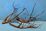 40-45 cm Moorkienwurzel Moorkienholz Garnelenbäumchen Wurzel