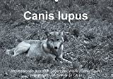 Canis lupus (Wandkalender 2017 DIN A2 quer): Impressionen in schwarz-weiss aus dem Leben der Wölfe (Monatskalender, 14 Seiten ) (CALVENDO Tiere)