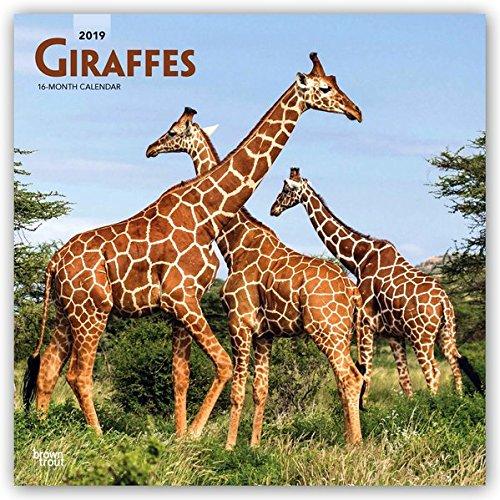 Giraffes 2019 Calendar