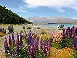 Lake Tekapo 1000 Teile Puzzle quer
