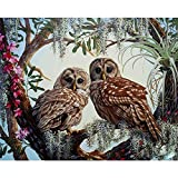 Malen nach Anzahl Kit, DIY Ölgemälde Zeichnung Leinwand mit Pinsel Dekor Dekorationen Geschenke - 16 * 20 Zoll, Mit Rahmen