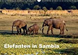 Elefanten in Sambia (Wandkalender 2018 DIN A3 quer): Die Elefanten im South Luangwa National Park können aus nächster Nähe beobachtet und fotografiert ... [Kalender] [Apr 01, 2017] Krause, Johanna - CALVENDO