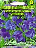 Wohlriechende Edelwicke Cuthbertson Danny blau 'Lathyrus odoratus' Wicke rankend