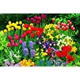 Sortiment 11  -  170 Blumenzwiebel Blumenmeer, Tulpen + Narzissen +  Iris +  Goldlauch +  Anemone de Caen + Traubenhyazinthen