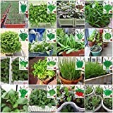 Portal Cool Fenchel 600 Samen: Pottd Pflanze Gemüsesamen Non-GMO Balkon Buntes Kleinpaket Ursprünglichen Frühling und Herbst Säen Gemüsesamen