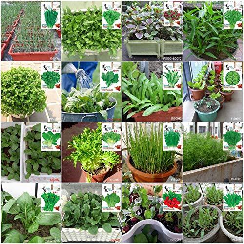 Shoopy Star Pakchoi: paquet de détail coloré économique NON OGM image Jardin Jardin Graines de légumes