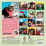 Image de Lil Bub's One-of-A Kind 2016 Calendar