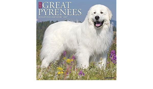 Just Great Pyrenees 2019 Wall Calendar Dog Breed Calendar Amazonde