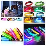 2 x LED Hundehalsbänder Nylon bunt Sortiert Größe M (mittlere Hunde) Reflektorband Halsband Hunde