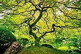 VLIES Fototapete (37V)-JAPANESE MAPLE TREE -Größe 350x260 cm in 7 BAHNEN 50cm Breite x 260cm Höhe -hoch qualitativer fotorealistischer DIGITALDRUCK! SPEZIALKLEBER für Vliestapete inklusive! Ahorn Baum Ahornbaum Japan Natur Landschaft Garten - Tapete Poster Wandbild Bildtapete Wall Mural