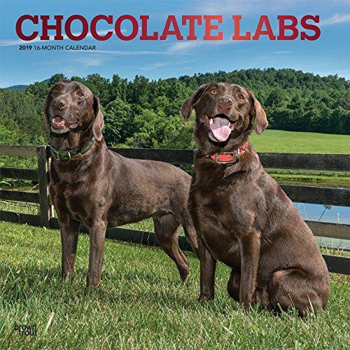 Chocolate Labs 2019 Calendar par Inc Browntrout Publishers