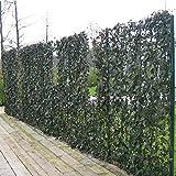 Efeu 5 meter (30 Pflanzen); 100% sichtschutz
