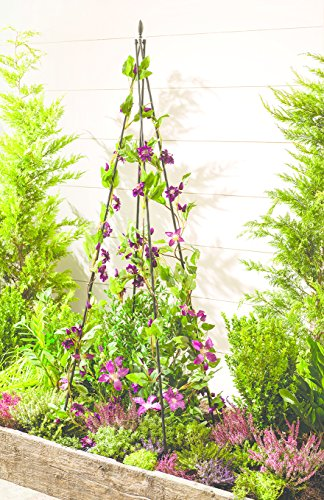 grow-it-wigwam-plant-support-durable-steel-outdoor-garden-single-pack-patio