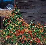 Pinkdose® Pinkdose Blumensamen: Kanarische Vogel Blume Kletterpflanze Blumensamen Pflanze Terrasse Garten Samen (14 Pakete) Garten Pflanzensamen Von