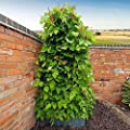 Gärtner Pötschke Bohnenzelt von Gärtner Pötschke auf Du und dein Garten