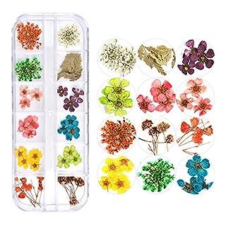 Pure Vie Nagel Art Glitter Strassstein Edelsteine Strass Getrocknete Natürliche Blumen-Verzierung - 3D Nagel Kunst Funkeln Rhine Scheibe Dekoration - Blumen