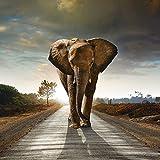 Artland Qualität I Alu Küchenrückwand Spritzschutz Küche 60 x 60 cm Tiere Wildtiere Elefant Foto Braun G5TH Ein Elefant Läuft auf Einer Straße mit der Sonne im Rücken
