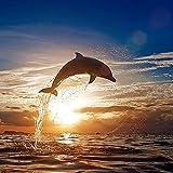 Shi18sport Neue DIY Diamant Malerei Sonnenuntergang Dolphin 5 D-Punkt Bohren Bohren Cross Stickerei, 50 X 50 cm