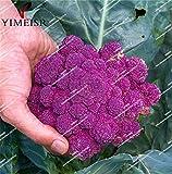semi Cavolfiore viola interni piante ortaggi semi per la casa giardino bonsai Semi Brocoli 30pcs / bag
